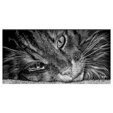 Original Scratchboard Drawing by Michelle Pattee - Sebastian