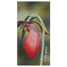 Miniature Watercolor Painting by Robert de Geus-Wildflower (Lady Slipper)