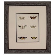 Plate XXII, Moths, Antique Watercolored Engraving by Dru Drury