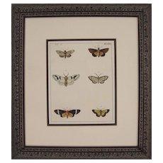 Plate XXII, Moths, Antique Watercolored Engraving by Dru Drury