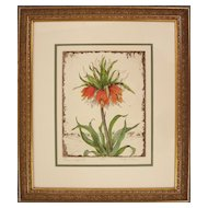 Crown Imperial, Original Botanical Etching by Carolyn Cohen