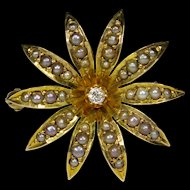 Antique Victorian 10K Gold Seed Pearl & Diamond Sunburst Flower Brooch