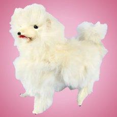Miniature Barking White Fur Salon Dog