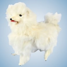 Miniature Barking White Fur Salon Dog