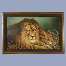 Fabulous Lions Oil Painting 1949