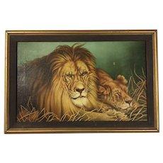 Fabulous Lions Oil Painting 1949