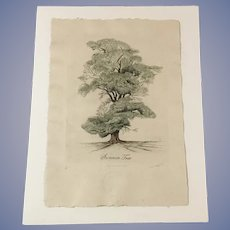 Lyndi Sales Summer Tree Signed Numbered Original Etching Trowbridge