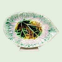 Etruscan Majolica Begonia Leaf - Pickle Plate 1880's