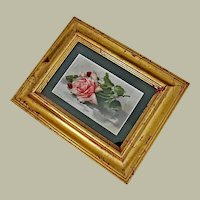 Old Catherine Klein Chromolithograph Print Pink Rose