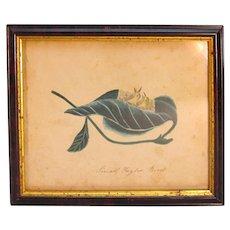 Nineteenth Century Watercolor of Birds in Leaf