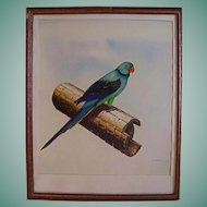 Original Parakeet Bird Painting by Vlido Polikarpus Estonion American Illustrator /Artist Oil Gouache Mixd Media