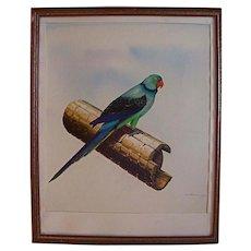 Original Parakeet Bird Painting by Vlido Polikarpus Estonion American Illustrator /Artist Oil Gouache Mixd Media