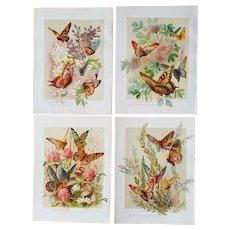 4 c1889 Paul de Longpre Butterfly Flower Print s Chromolithograph Lilacs Clematis Butterflies