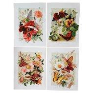 4 c1889 Paul de Longpre Butterfly Flower Print s Chromolithograph Roses Poppies Pansies Daisies Butterflies