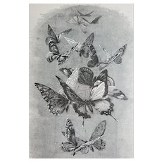 c1889 Butterflies Print Engraving Butterfly Antique Victorian