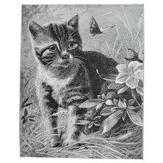 c1889 Kitten Butterfly Print Engraving Antique Victorian Cat