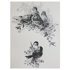 c1889 Bird Print Hector Giacomelli Engraving Birds Dreaming Antique Victorian