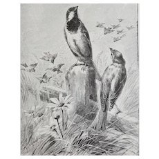 c1889 Bird Print Hector Giacomelli Engraving The Sparrow Antique Victorian Vintage