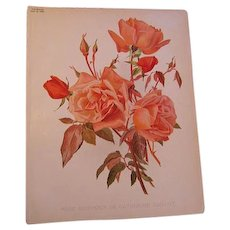 Vintage Roses Print Guillot Chromolithograph Antique