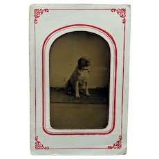 Sixth Plate Tintype of Adorable Pooch
