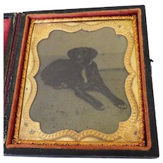Recumbent Dog Tintype Cased 1/6 Plate