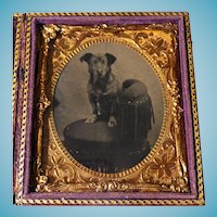 Dog On Chair Cased 1/6 Plate Tintype