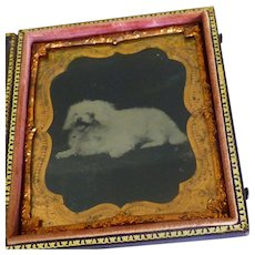 Little White Dog Tintype Cased 1/6 Plate
