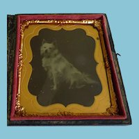 Cased 6TH Plate White Dog Tintype