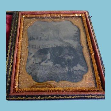 Cased 6th Plate Tintype Recumbent Dog
