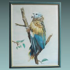 Blue Parrot by John Baxendale (1919-1982) Watercolour Watercolor Painting Bird