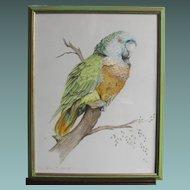 Green Parrot John Baxendale  1919-1982 English Bird Watercolor Watercolour