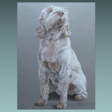 MAGNIFICENT Portrait Study of an Italian Spinone Dog by Will Taylor 2006 Pastel