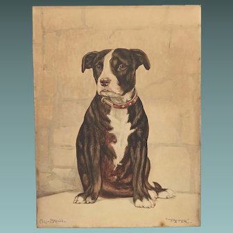 """c.1920s Watercolour Painting of 'Peter"""" a Bull Terrier Dog by Mil-Brown"""