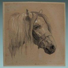 Fabulous Antique English Drawing Graphite Pencil Study of a Horse Portrait
