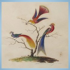 Georgian Antique English Watercolour Painting of Birds of Paradise  1825 Signed