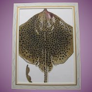 Spotted Ray Fish Watercolour Painting by Charlotte Knox 1988