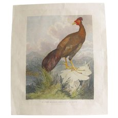 RARE English  Antique 1796 Hand Coloured Print of a Pheasant by Staunton