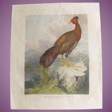 VACATION SALE -35%!!! RARE English  Antique 1796 Hand Coloured Print of a Pheasant by Staunton