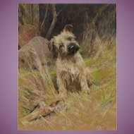 Limited Ed Print  of a Pastel of a Terrier Dog Puppy 'Come On!' by Arthur Wardle
