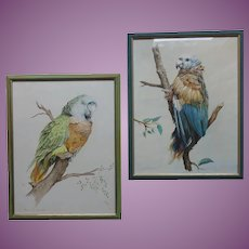 PAIR of Parrots Watercolour Watercolor Painting by John Baxendale 1919-1982