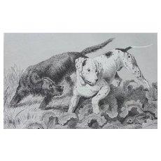 """Pointer and Setter"" Dog Antique Steel Engraving Sir Edwin Landseer"