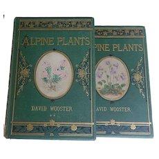 TWO BEAUTIFUL Bindings ~ 2 Vols 'Alpine Plants' 1892/4 by David Wooster 108 Stunning plates