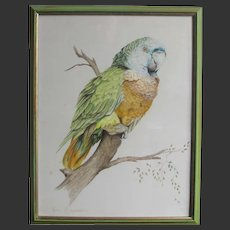 Watercolour Painting of a Green Parrot Bird by John Baxendale 1919-1982