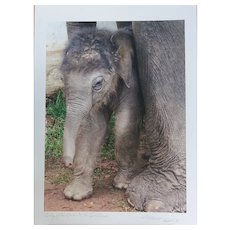Baby Elephant Hi Quality Giclee Print by Susie Green - signed but not numbered