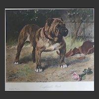 'England's Pride'  [Pressgang Champion Bulldog] 1902 Arthur Wardle  1970s handcoloured Restrike from the original plate