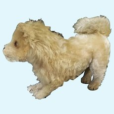 "1920's Steiff 7"" Mohair German Spitz Dog"