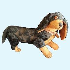 Early Mohair Steiff Dachshund Dog with Glass Eyes