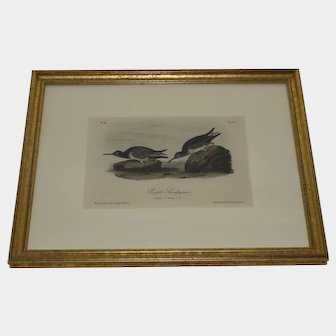 """Hand Water Colored Lithograph by John Audubon """"Purple Sandpiper"""" framed"""
