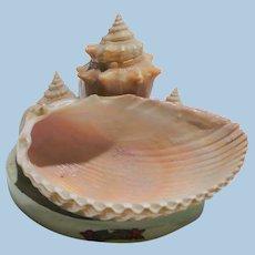 Shell Art Souvenir Florida Dish