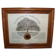 Vintage Framed Slice Of History From The State of Texas Famous Treaty Oak